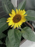 花粉たっぷり